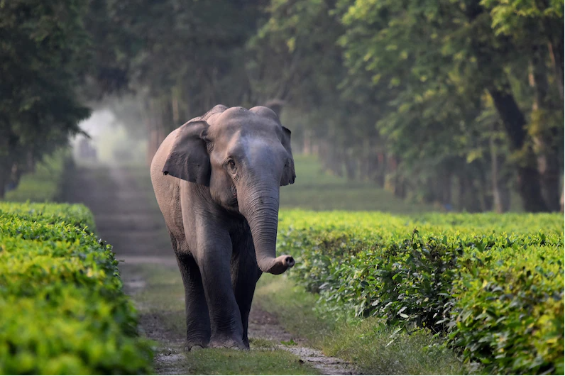 How Leaders Can Address The Elephant(s) In The Room