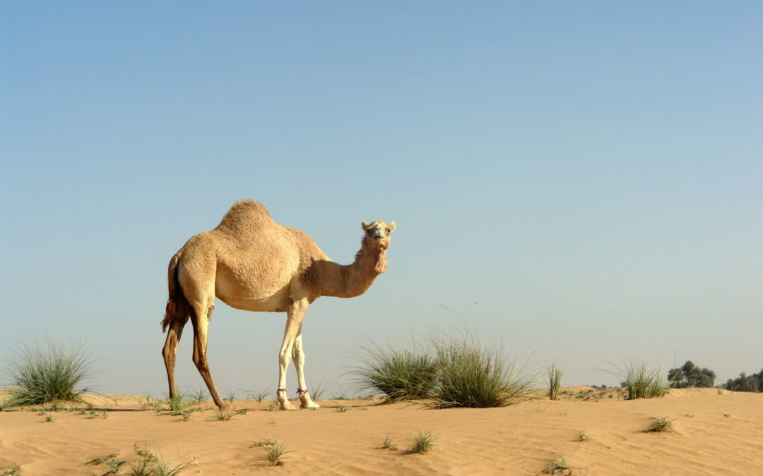 Hiding The Camel To Get Things Done